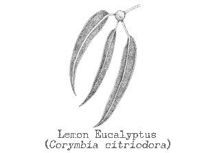 Lemoneucalyptus Oil 6461